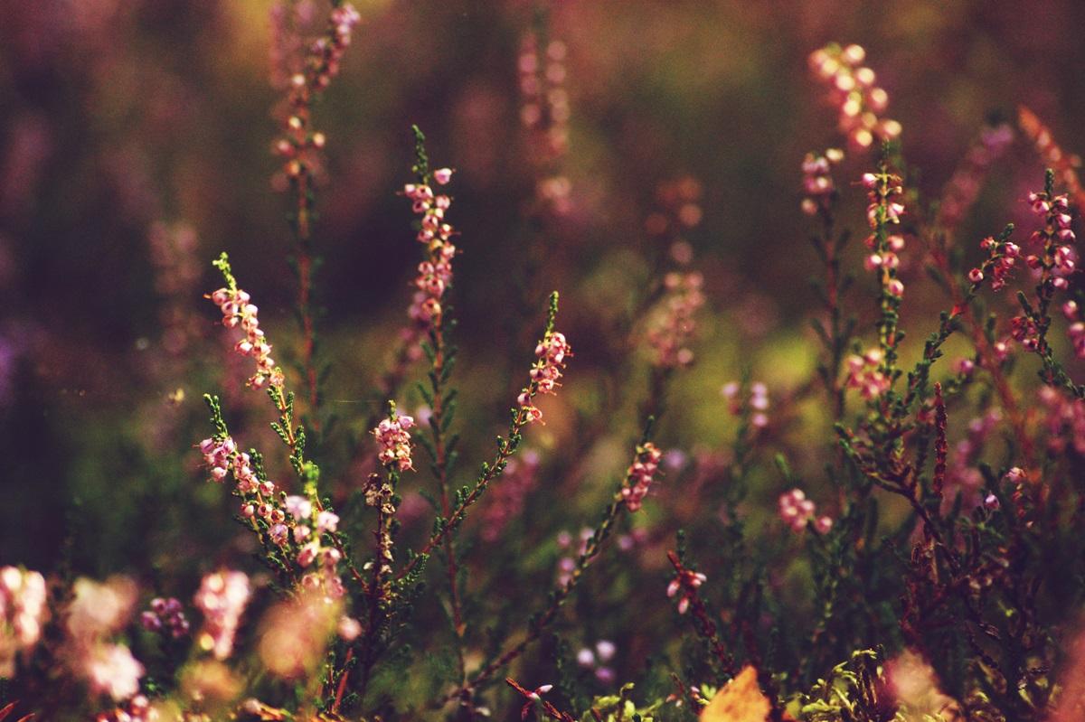 jak poprawić sobie nastrój jesienią